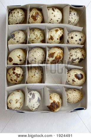 Nineteen Eggs In A Box