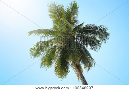 View of coconut tree with blue sky