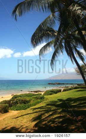 Beach Scene With Palm Trees On Maui,Vertical