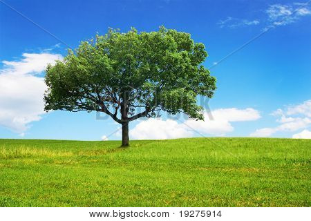 One big tree on green field