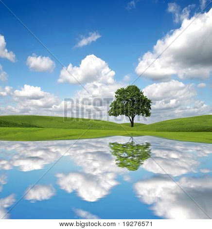 Abstract of an lone tree in full leaf in summer standing alone