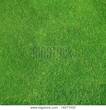 Textura muito detalhado de verde-golf de grama close-up vista