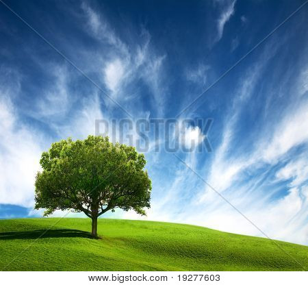 Old tree on green field