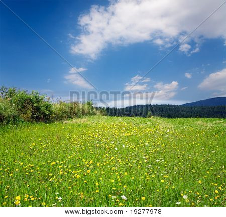 Green grassland