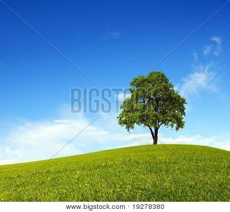 Single tree on hill and blue sky