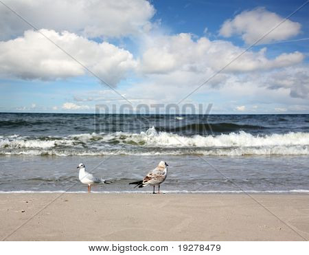 Sea landscape - sea, beach,seagulls, the blue sky and white clouds