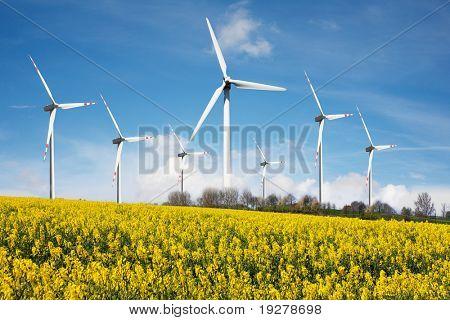 Wind farm with rapeseed field