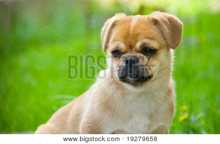 Cute little dog staying on grass looking to the side