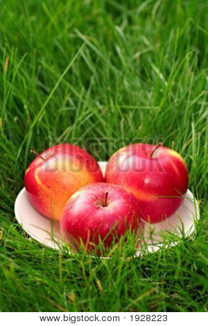 Apples On Grass