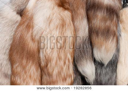 Polar fox fur tails closeup