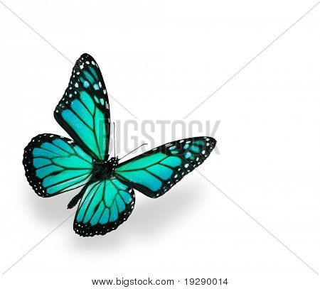 Green and Blue Vivid Butterfly Isolated on White. Soft shadown undernath.