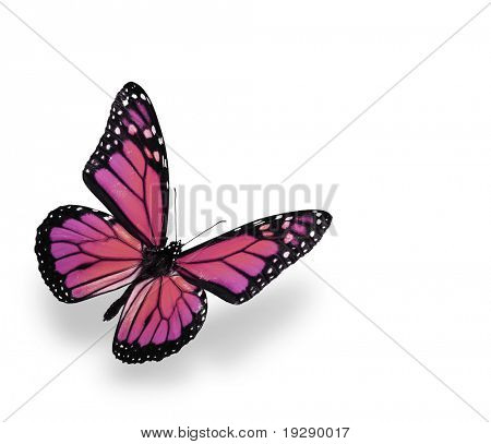 Vibrant Pink and Purple Butterfly Isolated on White. Soft shadow underneath.