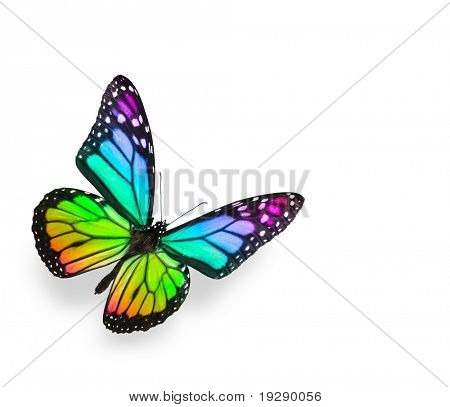 Regenbogen-Schmetterling, Isolated on White