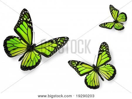 Green Butterflies Isolated on White Flying towards center of frame