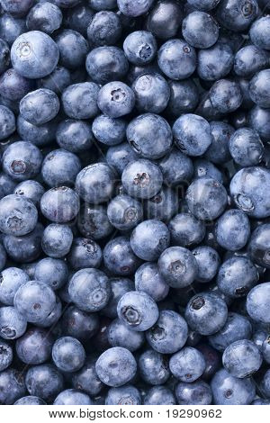 Blueberries filling entire frame. Critical focus on one layer of top blueberries.