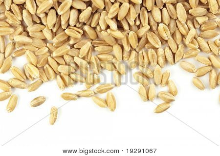 Wheat grain pieces isolated on white background. Critical focus on grain on left to middle of frame.