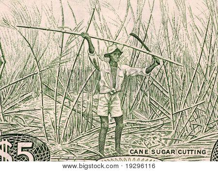 GUYANA - CIRCA 1989: Sugar Cane Harvesting on 5 Dollars 1989 Banknote from Guyana.
