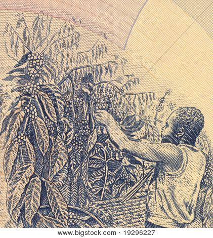 UGANDA - CIRCA 1983: Coffee Harvesting on 500 Shillings 1983 Banknote from Uganda.