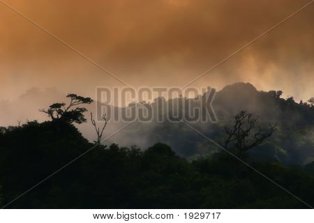 Clouds In The Rainforest