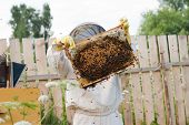 stock photo of honey bee hive  - Bee keeper at work - JPG