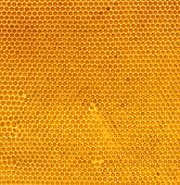 image of honey-bee  - fresh honey in comb - JPG