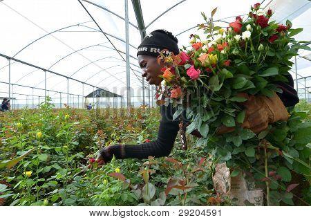 Afrikanische Bauer