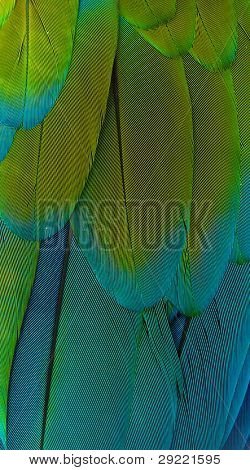 Detailed background of beautiful green and blue macaw parrot feathers