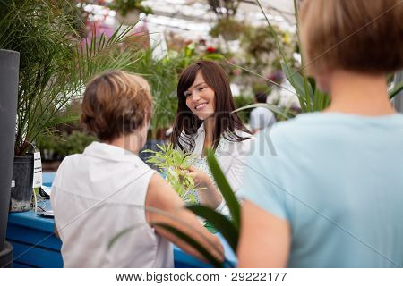 Customers at reception desk buying plants
