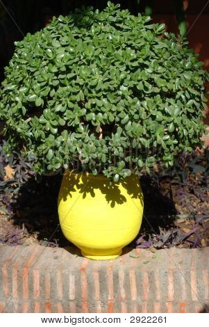 Green Bush In Yellow Pot