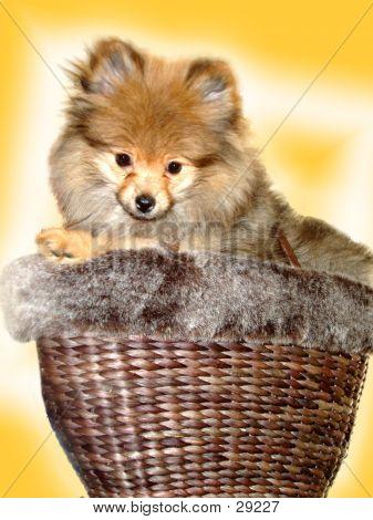 Basket Full Of Fluff