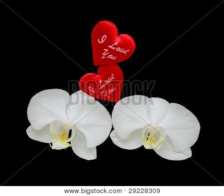 Pair Of Bright Red Hearts And White Orchids
