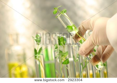 Small Plants In Test Tubes