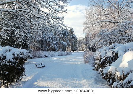 Walking Path, Bench And Snow In Oleksandriya Park, Bila Tserkva, Ukraine