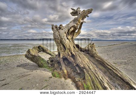 Driftwood On Whidbey Island, Washington