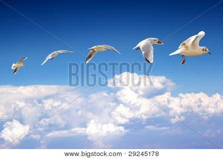 Set of flying seagull in many poses
