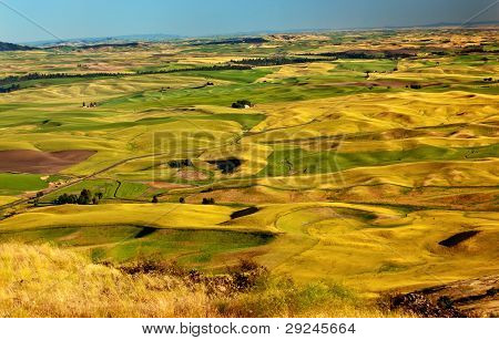 Yellow Green Wheat Fields And Farms From Steptoe Butte Palouse Washington State