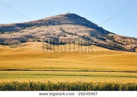 Steptoe Butte Yellow Green Wheat Field Blue Skies Palouse Washington State