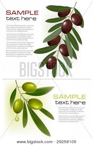 Two backgrounds with green and black olives. Vector illustration.