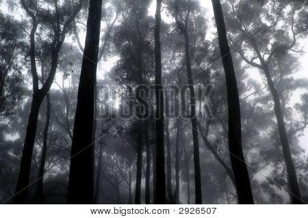 Misty Forest I