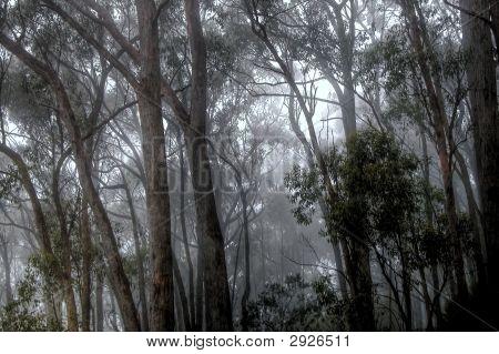Misty Forest V
