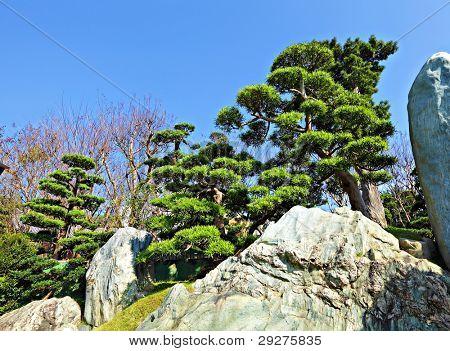 chinese garden plant