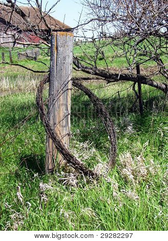 roll of barbed wire hanging on fence post