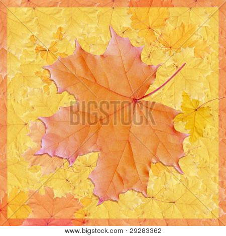 Background, colorful leaves