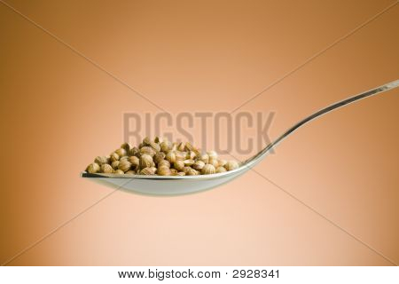 Spoon Filled With Coriander Seeds