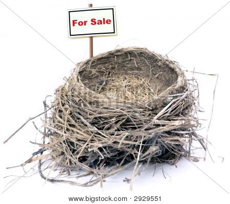 Bird Nest - Real Estate