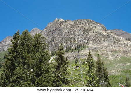 Mountain meeting Forest in Little Cottonwood Canyon