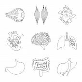 Isolated Object Of Anatomy And Organ Symbol. Collection Of Anatomy And Medical Vector Icon For Stock poster