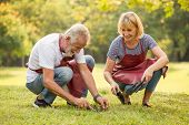 Happy Senior Couple Gardening In The Backyard Garden Together In Morning Time. Old People Sitting On poster