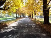 stock photo of tatas  - An alley of chesnut trees in Tata Hungary at fall - JPG