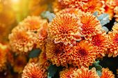 Orange Flower In Garden At Sunny Summer Or Spring Day. Flower For Postcard Beauty Decoration And Agr poster